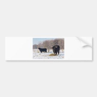 Pegatina Para Coche Montañeses escoceses negros en nieve del invierno