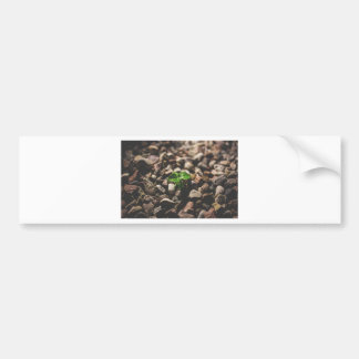 Pegatina Para Coche Planta frondosa verde que comienza a crecer en los