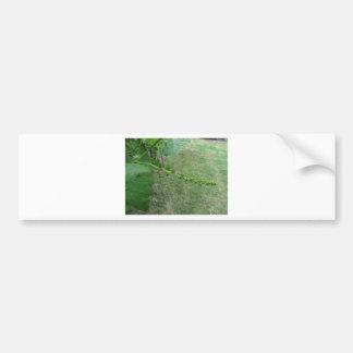 Pegatina Para Coche Primeros brotes en el árbol de mora blanca (Morus