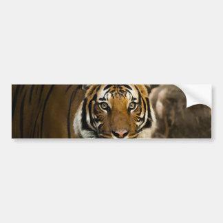 Pegatina Para Coche Tigre siberiano