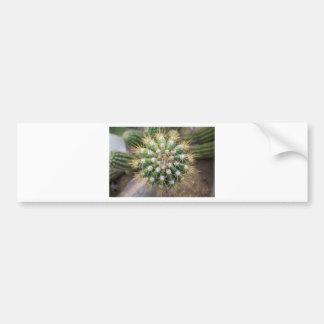 Pegatina Para Coche Top del cactus