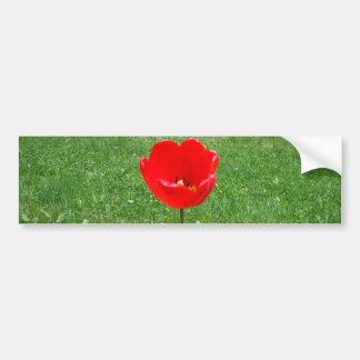 Pegatina Para Coche Tulipán rojo