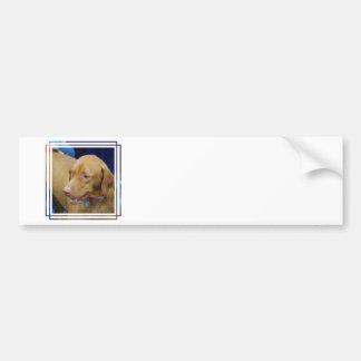 Pegatina para el parachoques del perro de Vizsla Pegatina De Parachoque