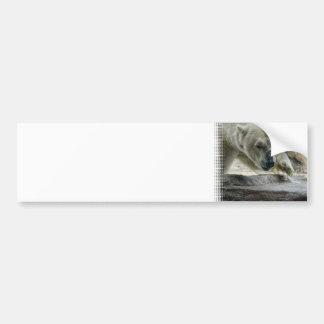 Pegatina para el parachoques juguetona del oso pol pegatina de parachoque