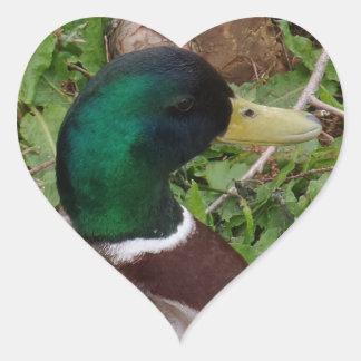 Pegatina principal verde del corazón del pato