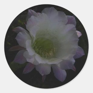 Cirio Flor