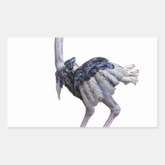 Pegatina Rectangular Avestruz