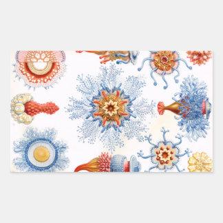 Pegatina Rectangular ¡Bluebottle de las medusas de Ernst Haeckel