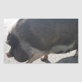 Pegatina Rectangular Cerdo grande