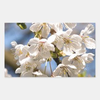 Pegatina Rectangular Cherry whites de OM de desnudo