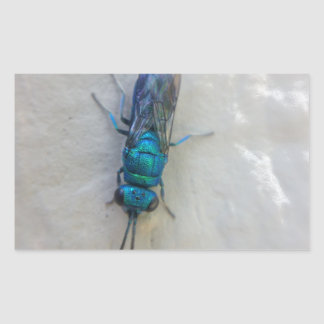 Pegatina Rectangular Chrysididae - avispa del cuco