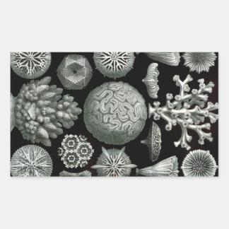 Pegatina Rectangular Coral de Ernst Haeckel Hexacorallia