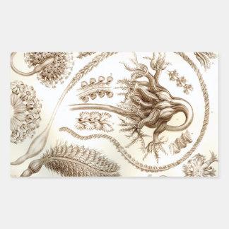 Pegatina Rectangular Coral de Ernst Haeckel Pennatulida