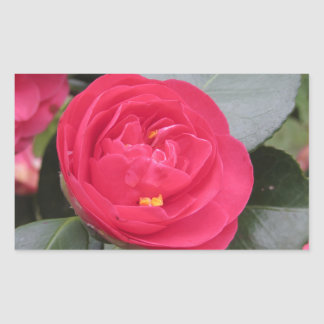 Pegatina Rectangular Cultivar japonés antiguo del japonica rojo de la