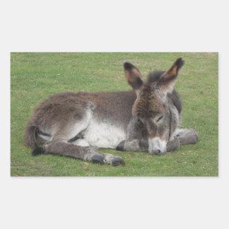 Pegatina Rectangular El dormir lindo del potro del bebé del burro del