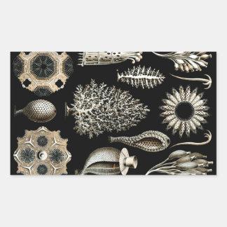 Pegatina Rectangular Ernst Haeckel Calcispongiae
