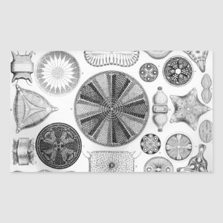 Pegatina Rectangular Ernst Haeckel Diatomea