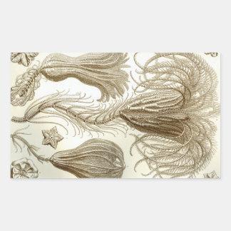 Pegatina Rectangular Estrellas de pluma de Ernst Haeckel Crinoidea