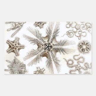 Pegatina Rectangular Estrellas frágiles de Ernst Haeckel Ophiodea