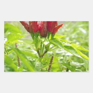 Pegatina Rectangular Flor del chile
