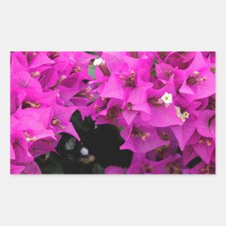Pegatina Rectangular Fondo fucsia púrpura del Bougainvillea