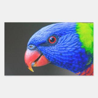 Pegatina Rectangular Fresco-Arco iris-Lorikeet-silkenphotography