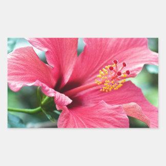 PEGATINA RECTANGULAR HABLA HIBISCUS FLOWER