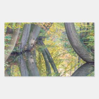 Pegatina Rectangular Los troncos de árbol de la caída con la reflexión