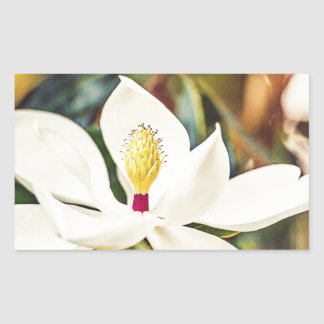 Pegatina Rectangular Magnolia en la floración