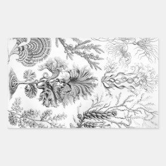 Pegatina Rectangular ¡Malas hierbas de Ernst Haeckel Fucoideae!