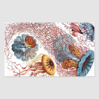 Pegatina Rectangular Medusas de Ernst Haeckel Discomedusae