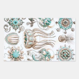 Pegatina Rectangular ¡Medusas de Ernst Haeckel Narcomedusae!