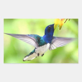 Pegatina Rectangular Pegatinas del colibrí