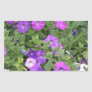 Pegatina Rectangular Petunia púrpura del tema del jardín de la