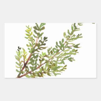 Pegatina Rectangular Pintura del watercolour de Rosemary de la hierba