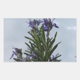 Pegatina Rectangular Planta de Rosemary con las flores contra el cielo