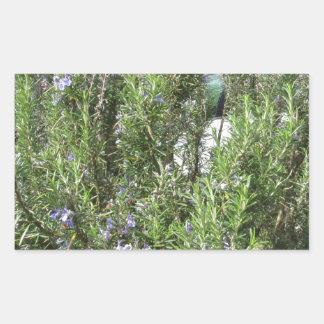 Pegatina Rectangular Planta de Rosemary con las flores. Toscana, Italia
