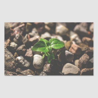 Pegatina Rectangular Planta frondosa verde que comienza a crecer en los
