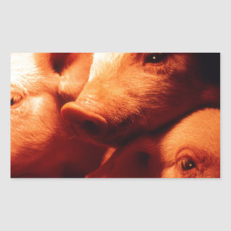 Pegatina Rectangular Tres pequeños cerdos