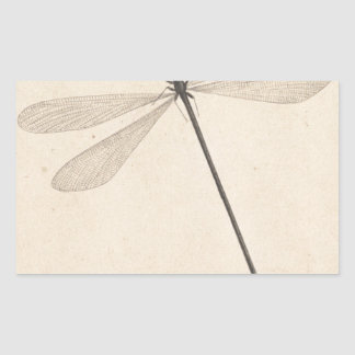 Pegatina Rectangular Una libélula, por Nicolás Struyk, temprano décimo