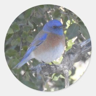 Pegatina Redonda Bluebird de la montaña