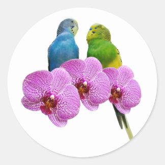Pegatina Redonda Budgie con la orquídea púrpura