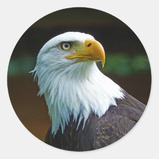 Pegatina Redonda Cabeza 001 de Eagle calvo 02,1 rd