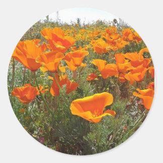Pegatina Redonda Campo anaranjado de la amapola de flores