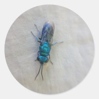 Pegatina Redonda Chrysididae - avispa del cuco