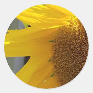 Pegatina Redonda Ciérrese para arriba del girasol amarillo