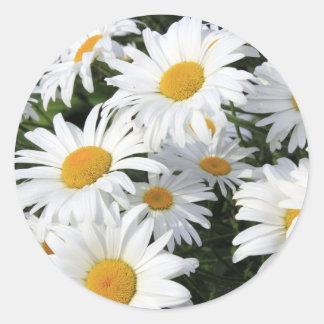 Pegatina Redonda Crecimiento de flores de la margarita blanco