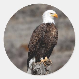 Pegatina Redonda Eagle calvo