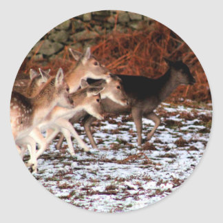 Pegatina Redonda En sus marcas (ciervos)
