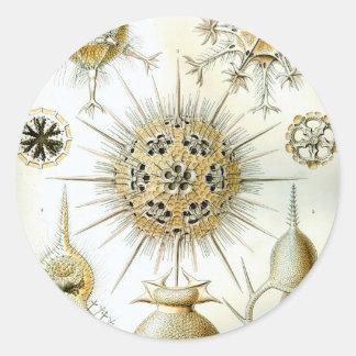 Pegatina Redonda Ernst Haeckel Phaeodaria